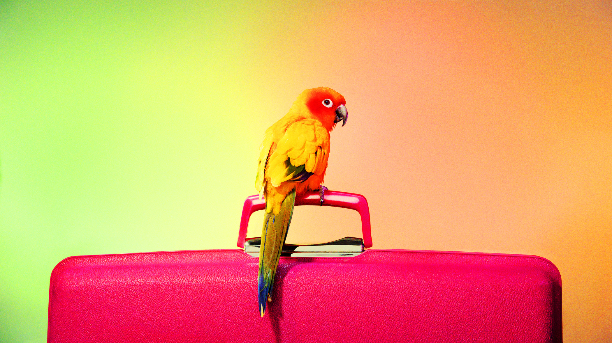 whode-195435-bird-perched-on-a-suitcase